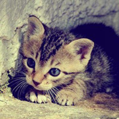 微信头像可爱小猫咪_WWW.QQYA.COM