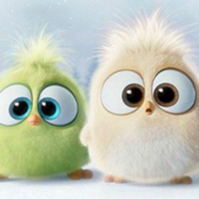 愤怒的小鸟圣诞节版微信头像图片下载_WWW.QQYA.COM