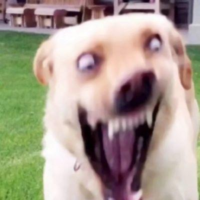 沙雕狗子的图片头像_WWW.QQYA.COM
