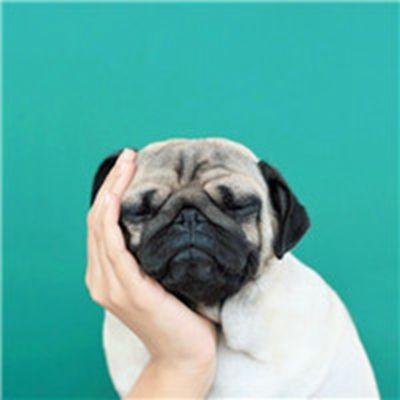 搞怪动物可爱头像_WWW.QQYA.COM