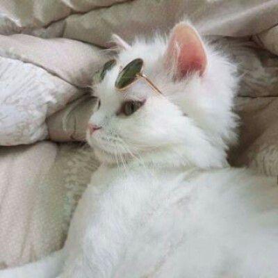 猫咪情侣头像一对高清_WWW.QQYA.COM