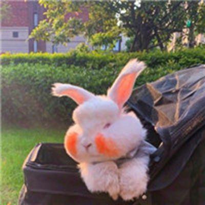 超可爱小兔子头像_WWW.QQYA.COM