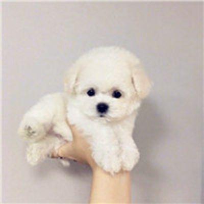可爱软萌小奶狗微信头像图片_WWW.QQYA.COM