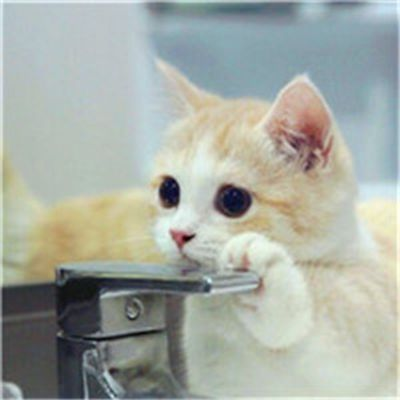 好看可爱的小猫咪头像_WWW.QQYA.COM