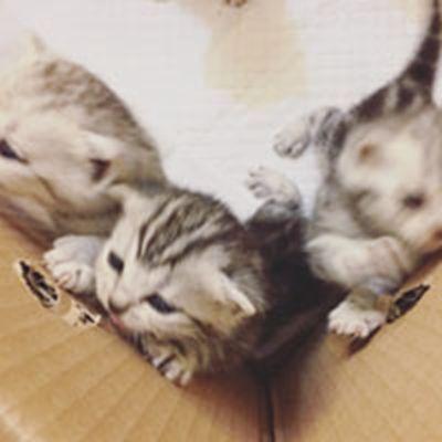 萌萌的小猫头像_WWW.QQYA.COM