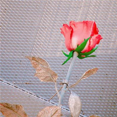 微信唯美好看甜甜的头像图片_WWW.QQYA.COM