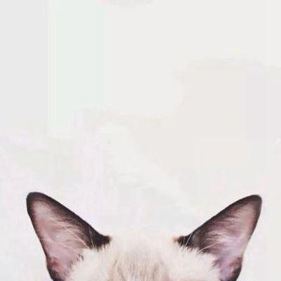 猫咪头像情侣_WWW.QQYA.COM