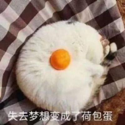萌宠情侣头像_WWW.QQYA.COM