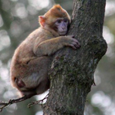 可爱猴子头像_WWW.QQYA.COM