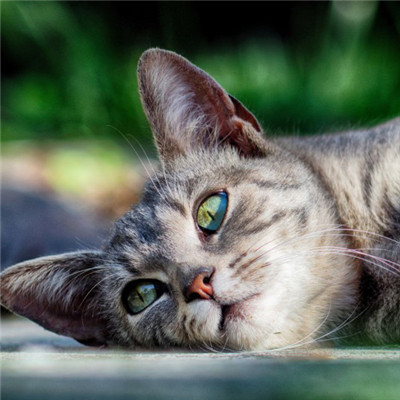 猫咪头像_WWW.QQYA.COM