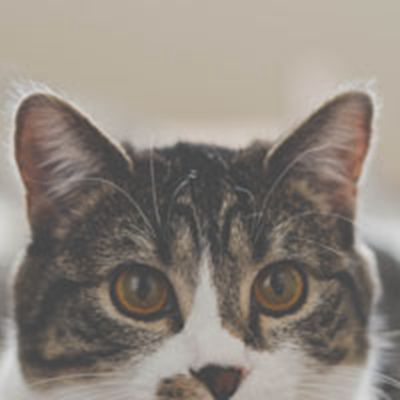 小猫照片可爱头像图片_WWW.QQYA.COM