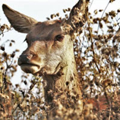 森系鹿头像_WWW.QQYA.COM