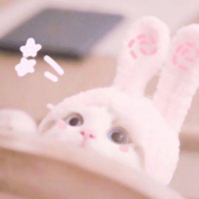 小猫小狗可爱图片头像_WWW.QQYA.COM