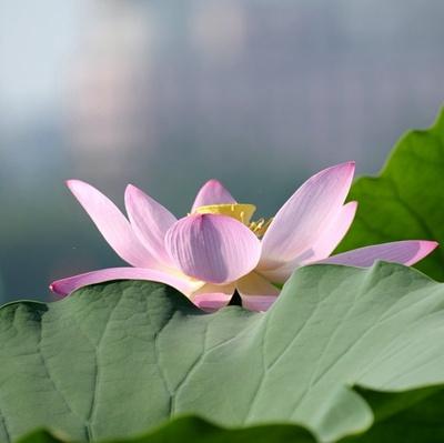近距离对焦莲花的摄影作品_WWW.QQYA.COM