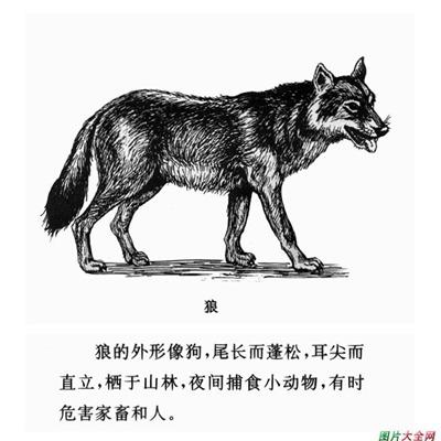 儿童简笔画图片大全_WWW.QQYA.COM