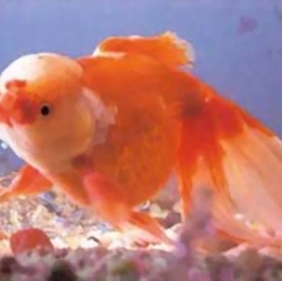 热带海底世界的好看观赏鱼_WWW.QQYA.COM