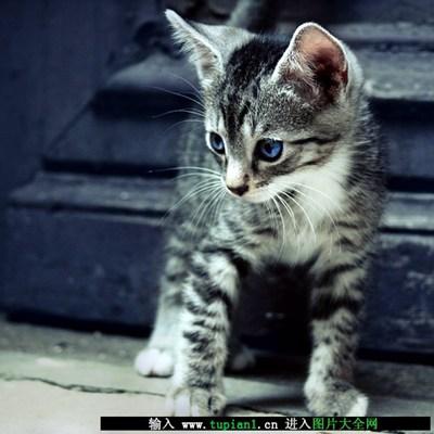 女生养的可爱宠物猫_WWW.QQYA.COM