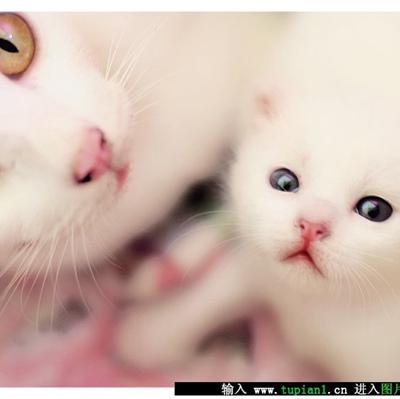 刚出生的小白猫幼崽_WWW.QQYA.COM