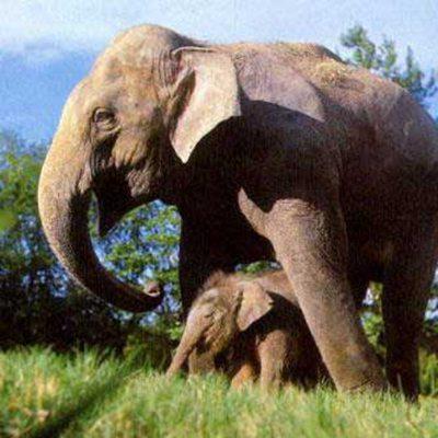 非洲象是陆地上最大的动物_WWW.QQYA.COM