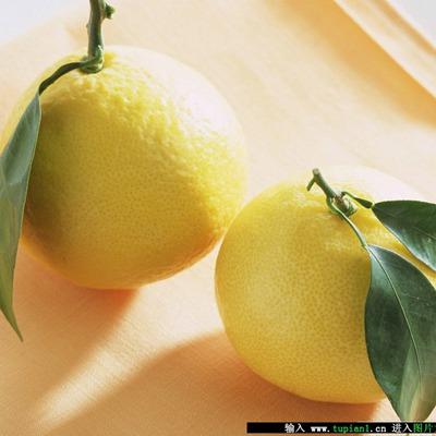 果皮非常光泽的柠檬果_WWW.QQYA.COM