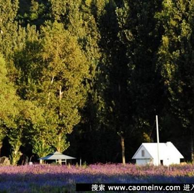 放眼花园尽是养眼的花草_WWW.QQYA.COM