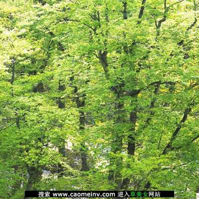 自然风景摄影作品欣赏_WWW.QQYA.COM
