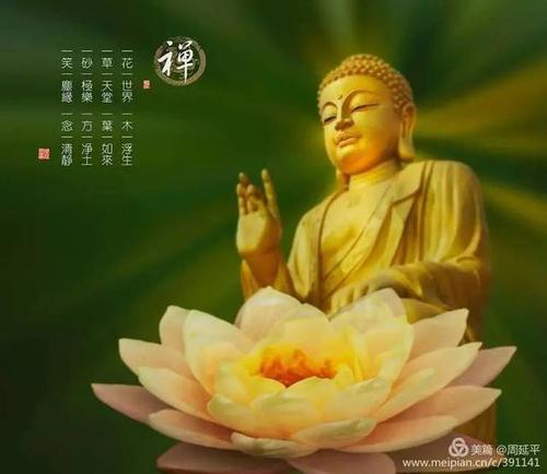 佛前一朵莲花图片_WWW.QQYA.COM