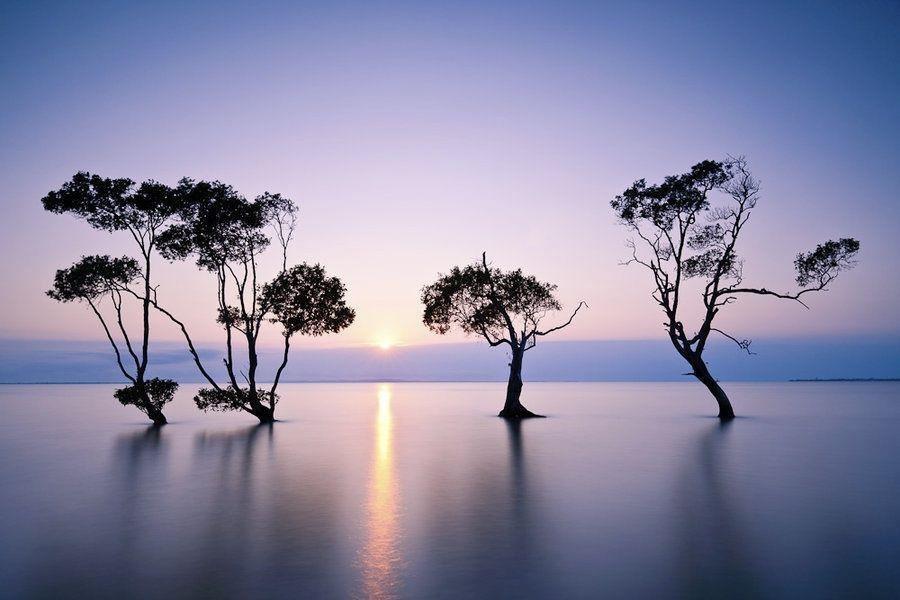 让人一看就静心的图片_WWW.QQYA.COM